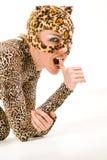 Puma cub Stock Photos