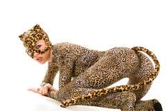 puma d'animal Images stock