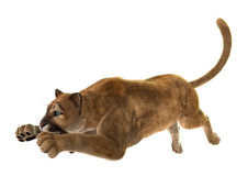 Puma. 3D digital render of a puma, also known as a cougar, mountain lion, or catamount, isolated on white background Stock Images