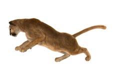 Puma Stock Images