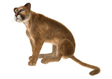 Puma. 3D digital render of a big cat puma sitting isolated on white background Stock Photo