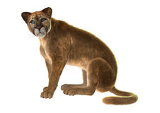 Puma. 3D digital render of a sitting puma, also known as a cougar, mountain lion, or catamount, isolated on white background Stock Photos