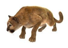 puma de grand chat photo stock