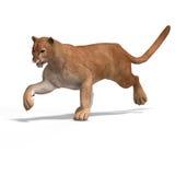 puma de grand chat Photos libres de droits