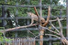 Puma em um ramo fotos de stock royalty free
