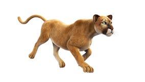 Puma, funzionamento del leone di montagna, animale selvatico su fondo bianco Immagine Stock Libera da Diritti
