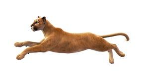 Puma, león de montaña que salta, animal salvaje en blanco Fotografía de archivo