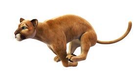 Puma, leone di montagna che sprinta, animale selvatico su bianco Fotografia Stock Libera da Diritti