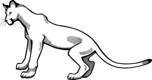 Puma. Line drawing of a puma or cougar Royalty Free Stock Photo