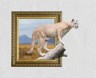 Puma no quadro com efeito 3d Foto de Stock