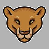 Pumas head on grey Royalty Free Stock Photos