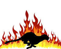 Puma silhouette Royalty Free Stock Image