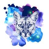 Puma sketch illustration Royalty Free Stock Photos