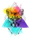 Puma sketch illustration Royalty Free Stock Image
