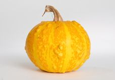 Pumkin Stock Photo