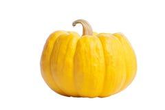 Pumkin. Yellow pumkin isolate on white royalty free stock images