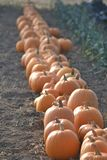Pumkin alley royalty free stock photography