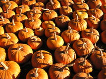 Pumkin Army Awaiting Orders. This Pumpkin Army is basking in the late autumn sunshine lovely late fall afternoon in central North Carolina Stock Photo