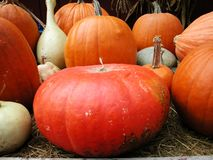 Pumkin display Royalty Free Stock Image