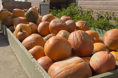 Pumkin display Stock Image