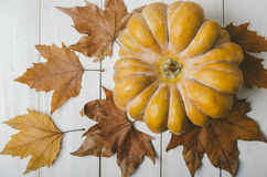 Pumkin and maple leaves Royalty Free Stock Photography