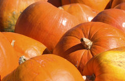 Pumkin pattern Royalty Free Stock Photography