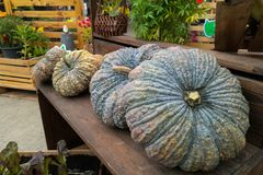 Pumkin for sale on old wood. Chair royalty free stock photography
