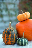 Pumkin still life Royalty Free Stock Images