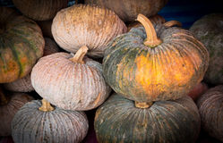 Pumkin Royalty Free Stock Photography