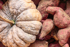 Pumkin and sweet potato Stock Images