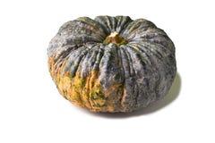 Pumkin on white background. A orange green pumpkin on white background Stock Photo