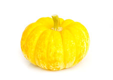 Pumkin. Stock Images