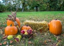 Pumkings variopinti di autunno Fotografia Stock