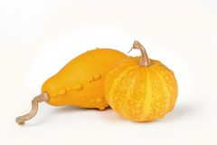 Pumkins Stock Photography