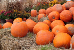Pumkins Royalty Free Stock Images