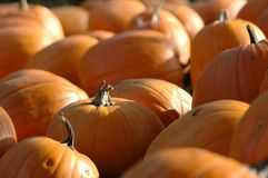 Free Pumkins Stock Photos - 406573