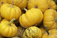 Pumkins anaranjado Foto de archivo