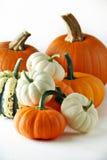 Pumkins e gourds fotos de stock royalty free