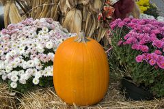 Pumkins & flowers Royalty Free Stock Photo