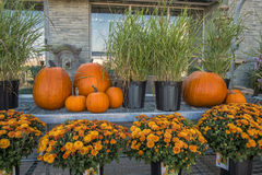 Pumkins & Flowers Royalty Free Stock Photography