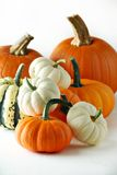 Pumkins and gourds Royalty Free Stock Photos