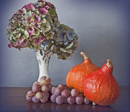 Pumkins,grapes and Hydrangea flowers Stock Photos