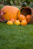 Pumkins on grass. Autumn still life with pumpkins Royalty Free Stock Photo
