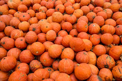 Pumkins. A lot of orange pumkim for sale Stock Images