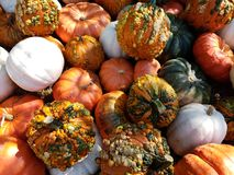 Pumkins oranges au soleil image stock