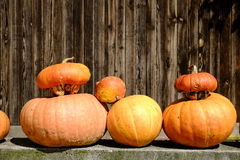 Pumkins. Pumpkins on display at local farm Royalty Free Stock Photography