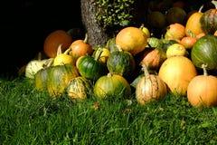 Pumkins. Pumpkins on display at local farm Stock Image