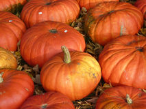 Pumkins for sale Royalty Free Stock Image