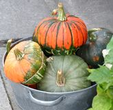Pumkins for sale. Found on street Corner royalty free stock photography