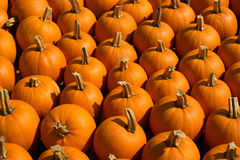 Pumkins For sale Royalty Free Stock Photos